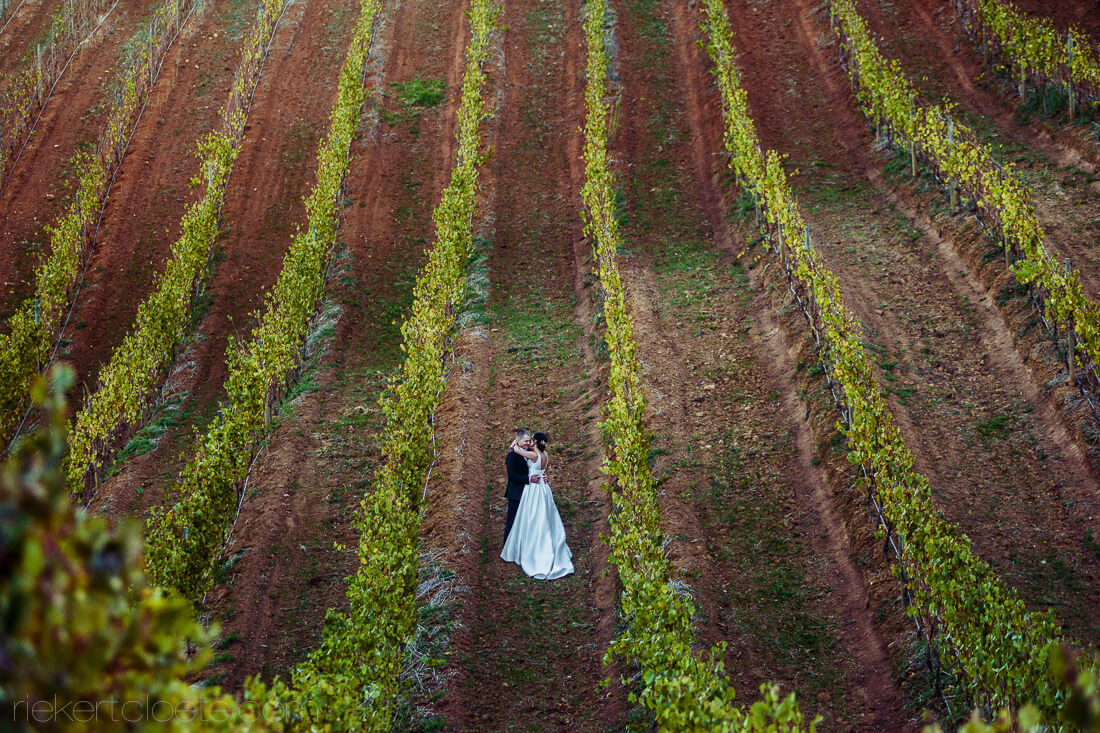 Tokara wedding in vineyards