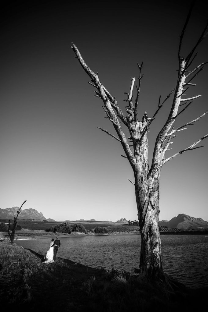 Wedding couple in a dry lake, desolate tree in frame