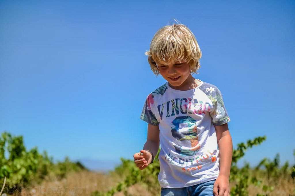 Boy walking in a sunny vineyard