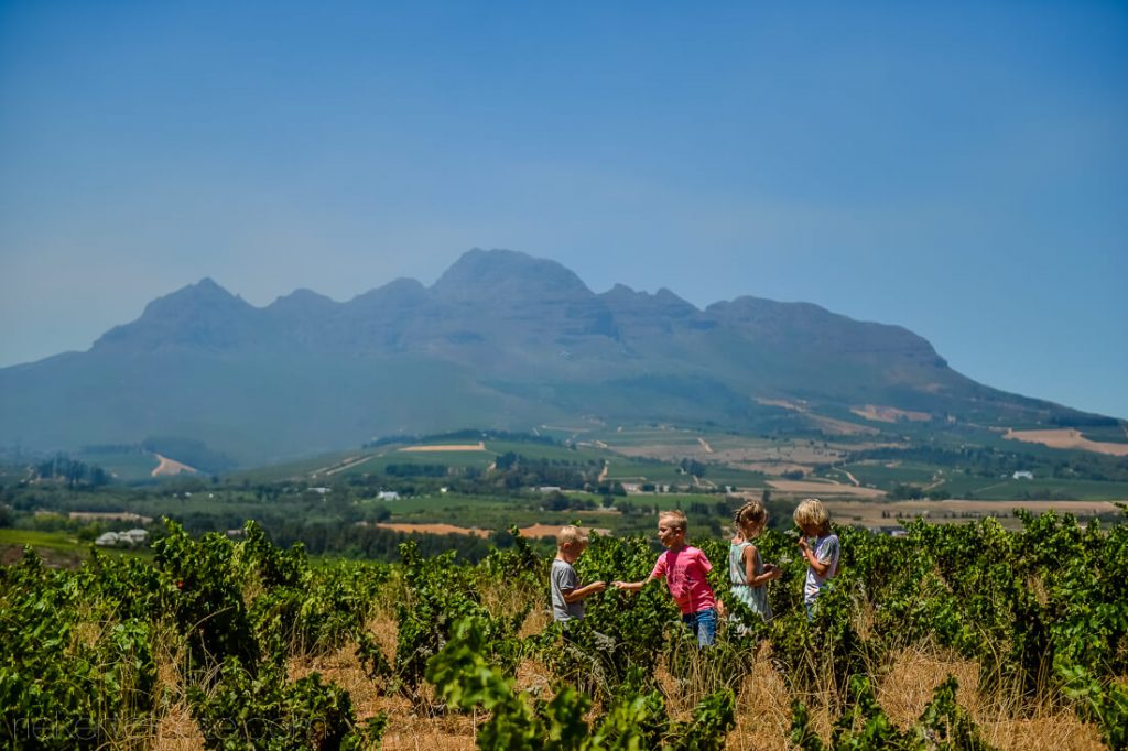 Children walking through a vineyard