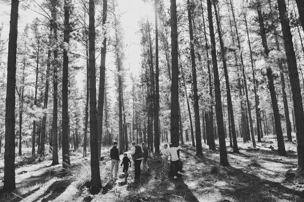 Black and white forrest